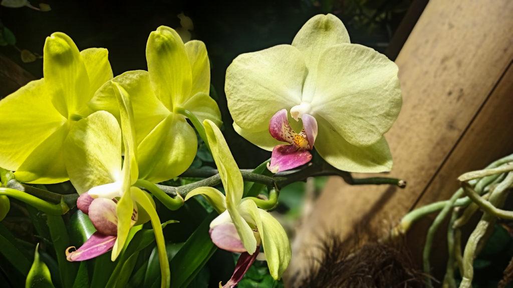 Orchidee im Phelsuma Grandis Terrarium