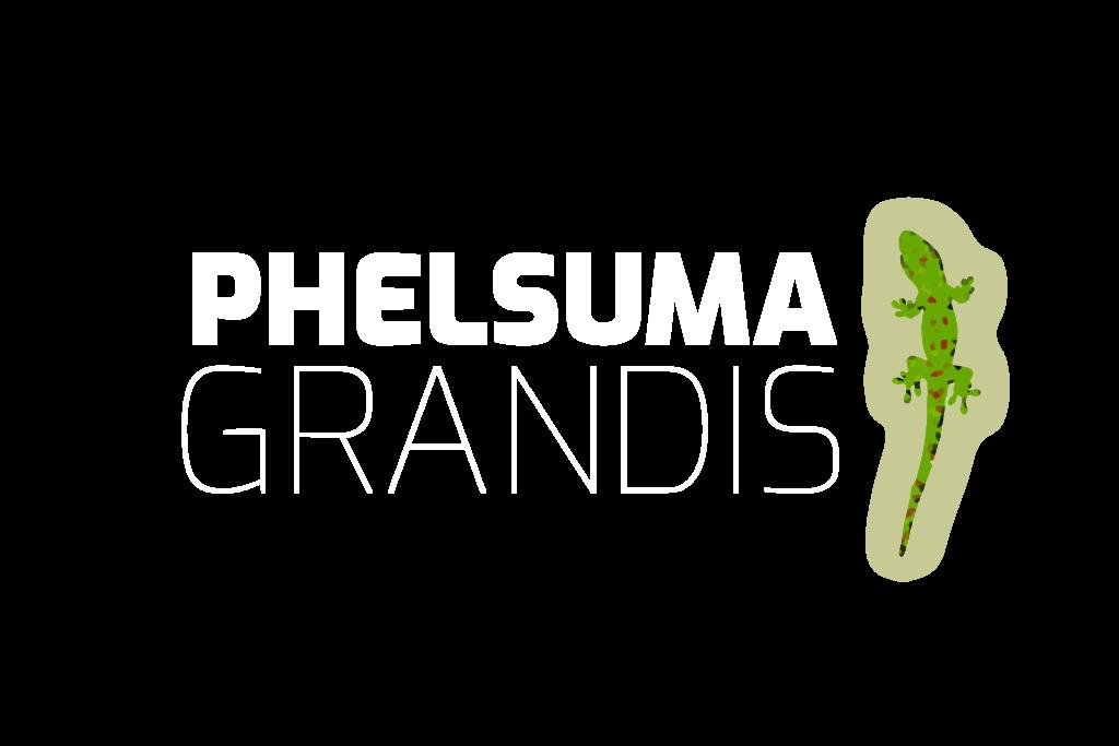 Phelsuma Grandis - Der Große Madagaskar Taggecko